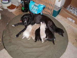 Jetta & Puppies 11-04