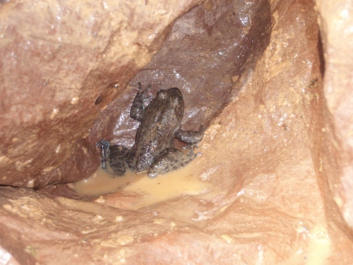 Yard frog 4-09-b