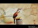 DSC_0030bird